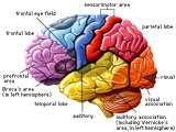 Taukah Kamu ? IQ Tinggi Tidak Menentukan Kecerdasan Seseorang